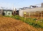 農地-烏日溪南合法農舍-臺中市烏日區