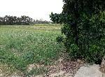 農地-新屋鄉美農地-桃園市新屋區十五間段路