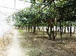 農地-燕巢果園農地-高雄市燕巢區